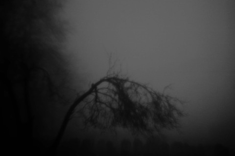 01_Arbusto